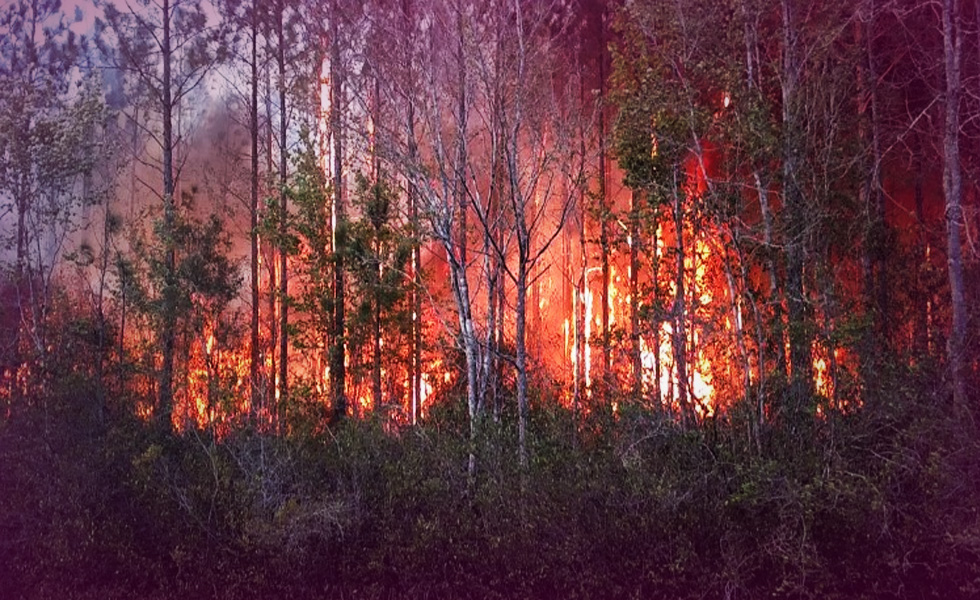 Burning books caused wildfire, destroyed homes