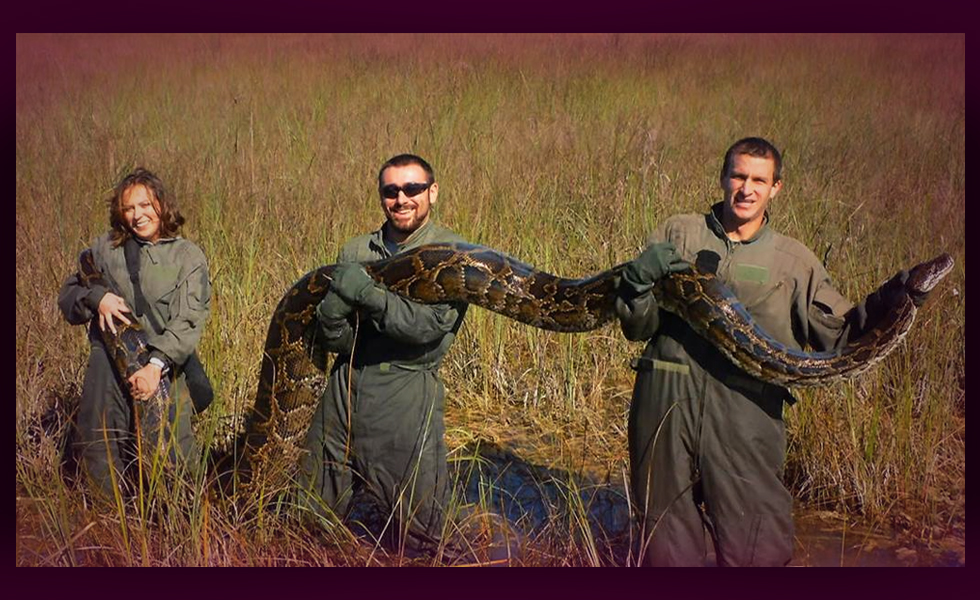 Join the Florida Snake Hunt