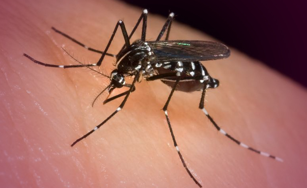 The fight against mosquito bites ends now – how?