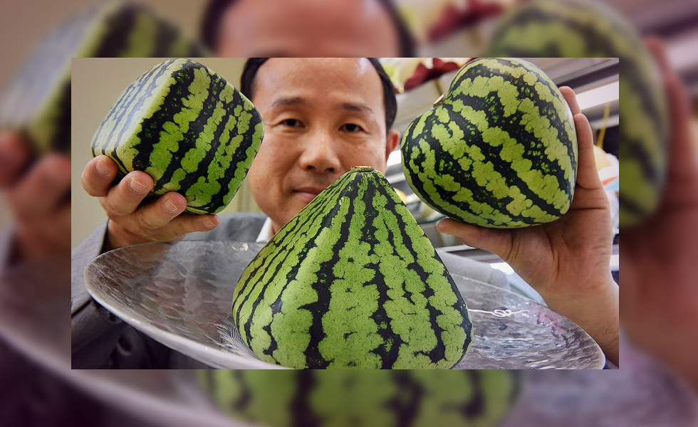 Why does a melon cost $27,000 in Japan?