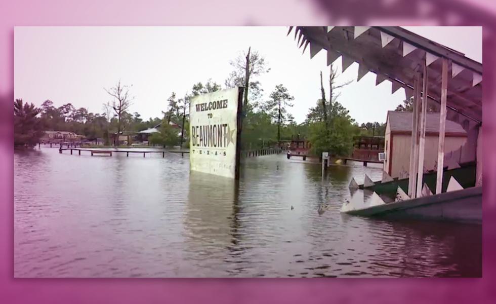 Alligator Sanctuary
